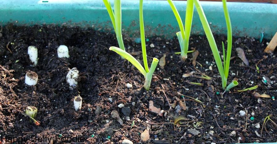 recycling chives